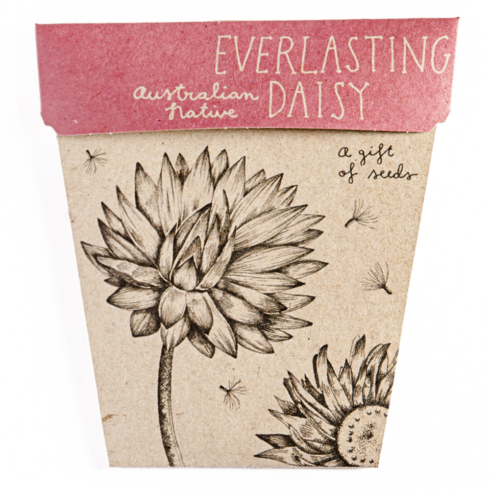 Everlasting Daisy Gift Of Seeds Sow N Sow