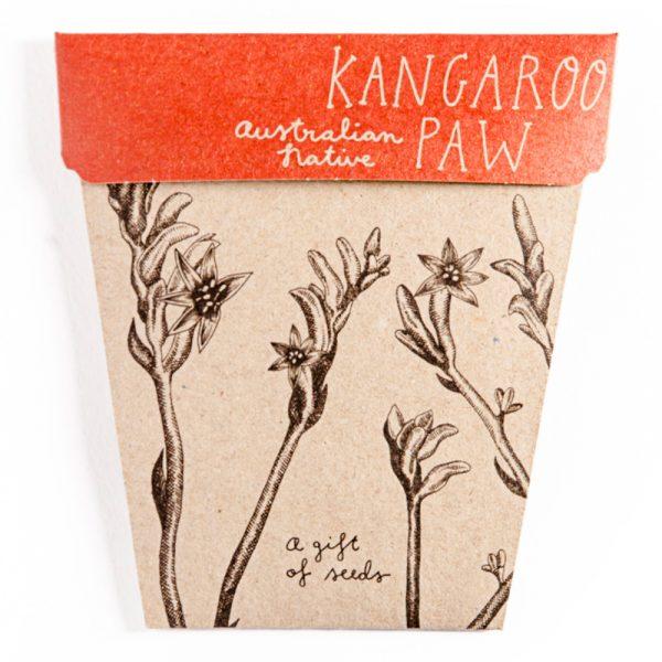 Australian_native_seed_kangaroo_paw