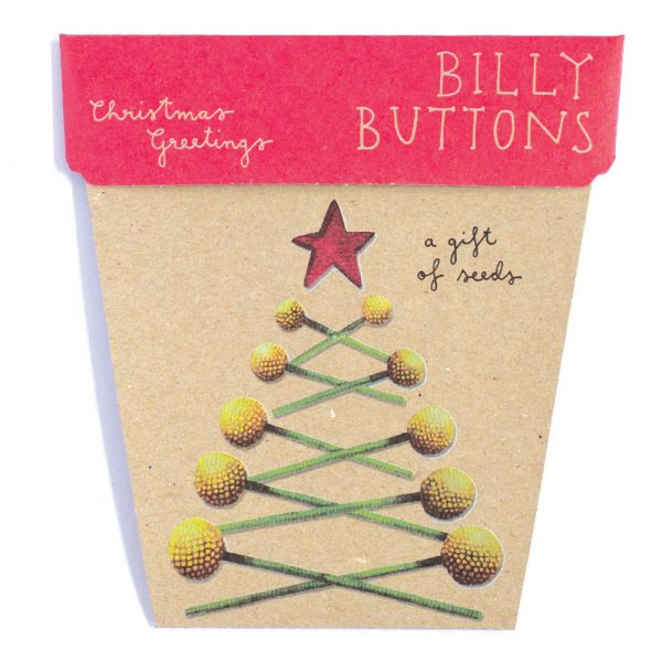 Billy_Buttons_seed_gift