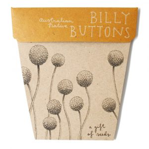 Billy_Web