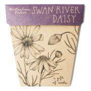 Swan River Daisy Seed brachyscome