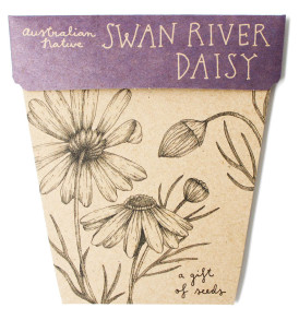 Swan River Daisy Seed brachyscome