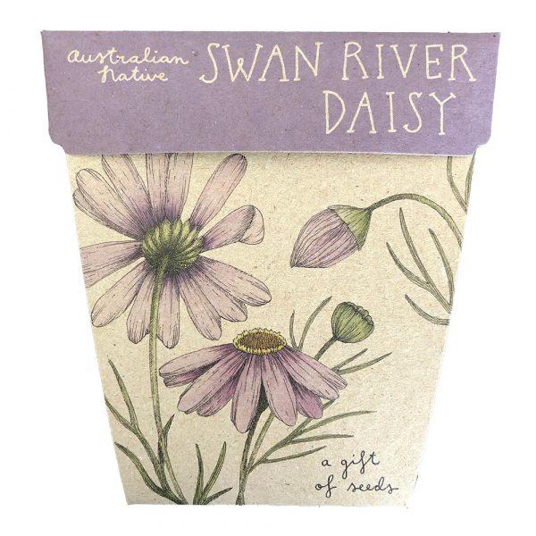 Swan River Daisy Seeds