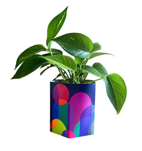Community Garden Plant