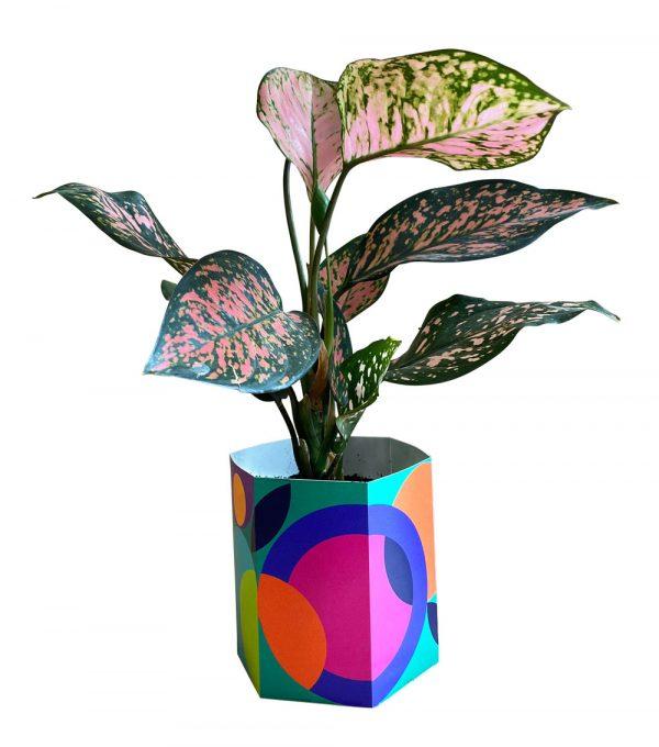 Plant Party Plant