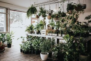 Trending indoor plants and how to keep them happy