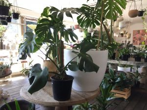 Trending plants and how to keep them happy