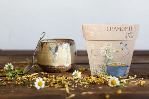 How to grow and brew tea at home