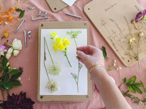 How to press flowers using a flower press