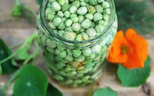 10 ways to cook with nasturtiums