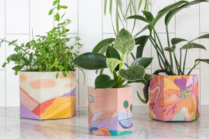 Sow 'n Sow Pop Up Pots featuring artwork by artist Jackie Anderson