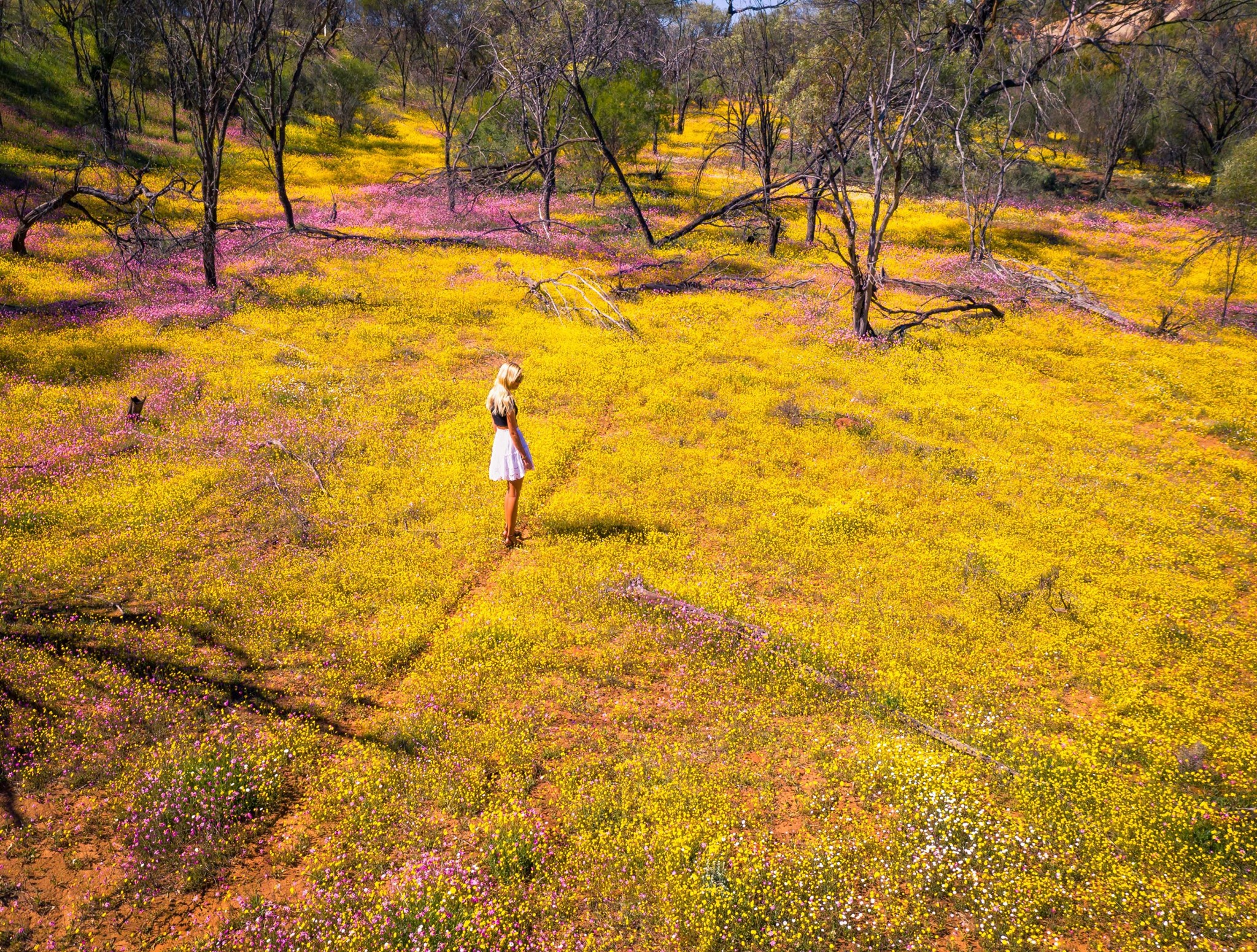 Where to see spectacular wildflowers in Western Australia