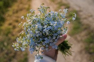 7 flower seeds to sow in spring